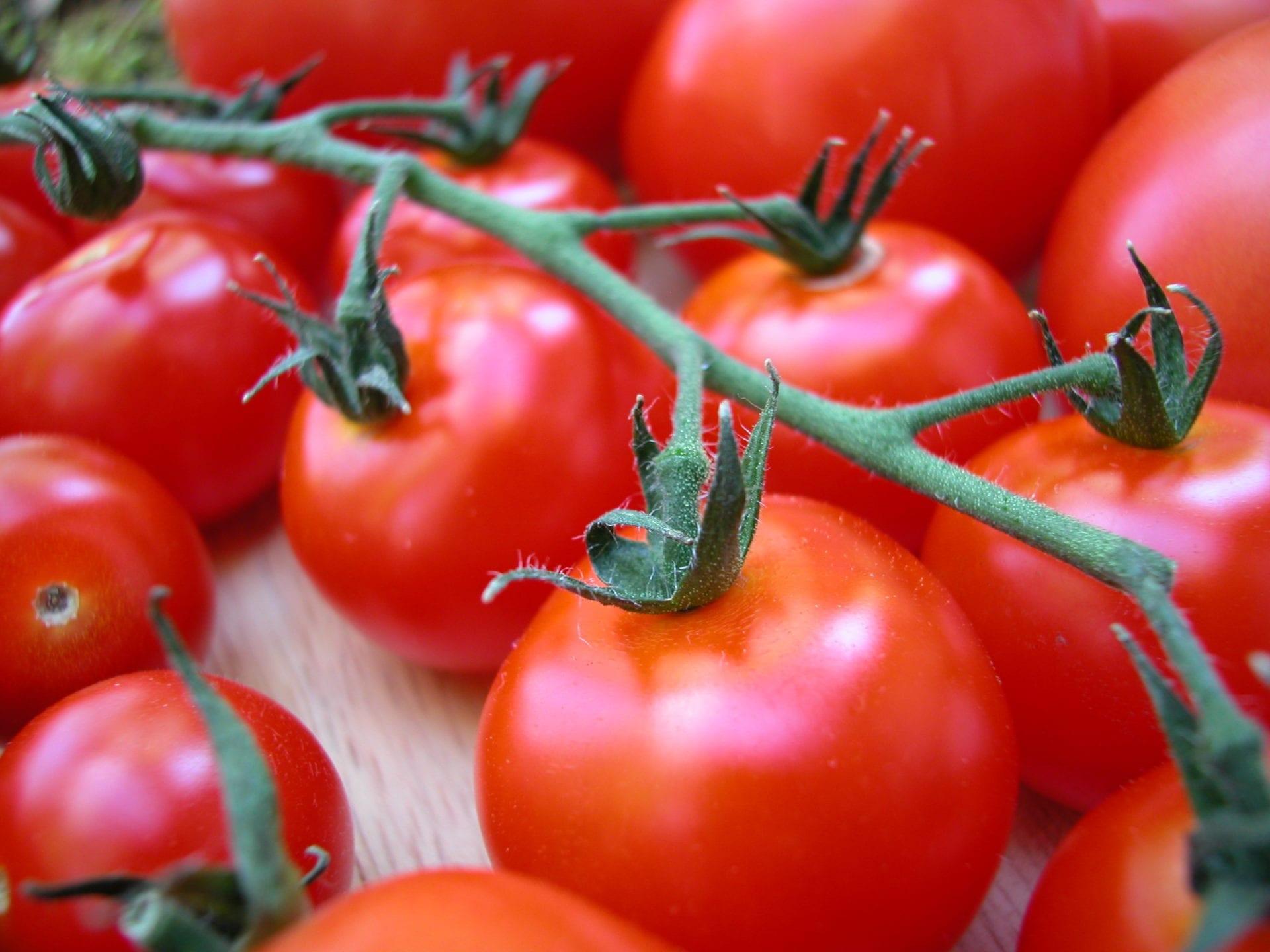 Viljelyohje: Tomaatti
