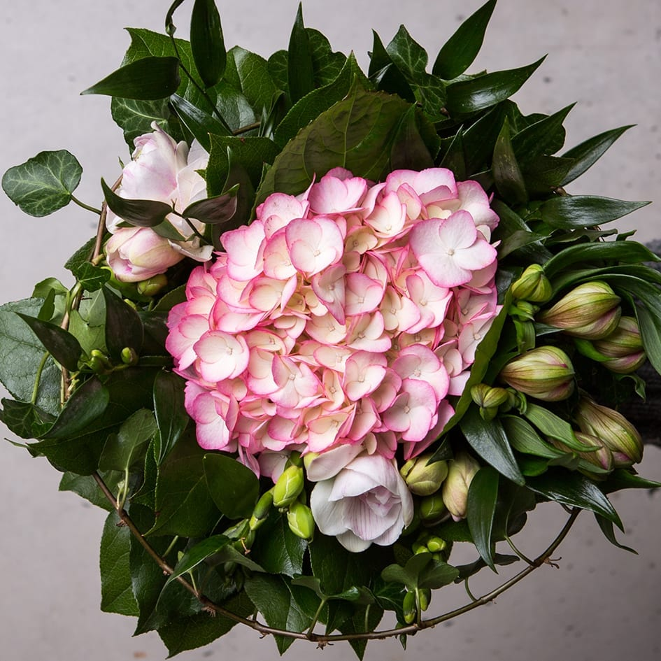 Hortensiakimppu