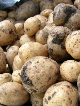 potatoes, wheelbarrow