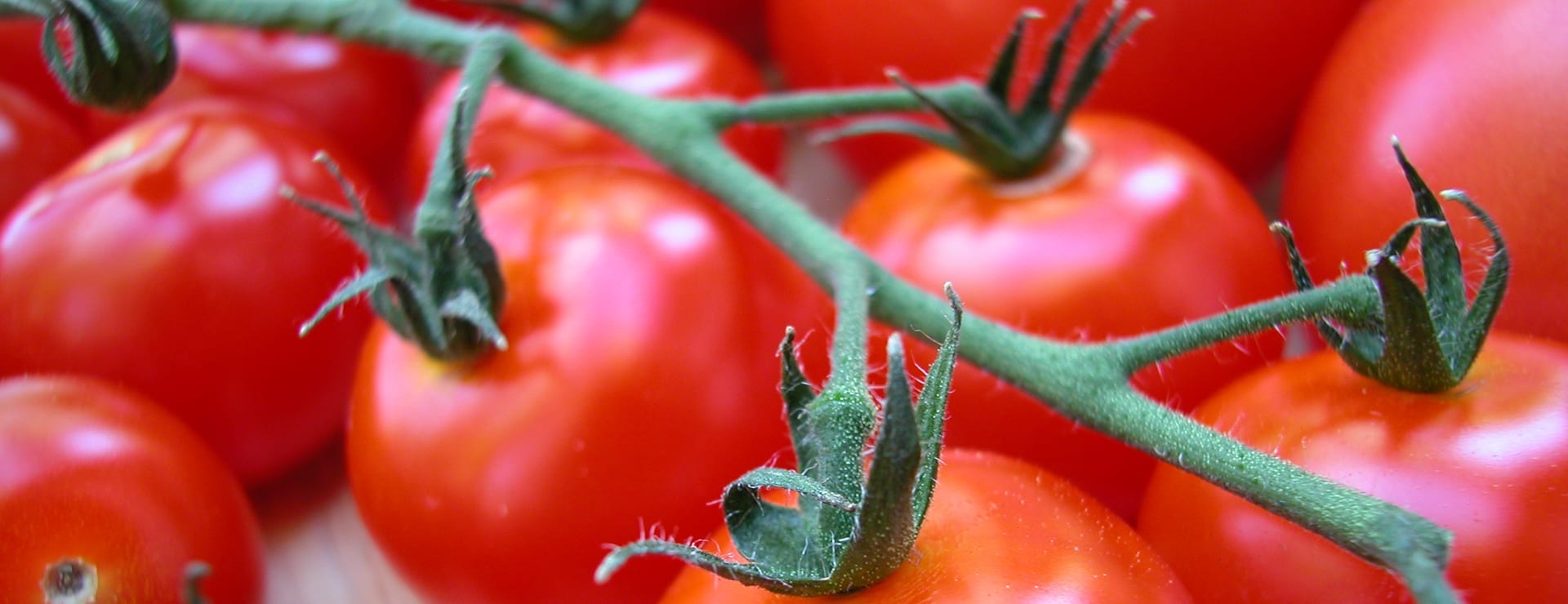 Viljelyohje: Tomaatti rakastaa lämpöä ja valoa!