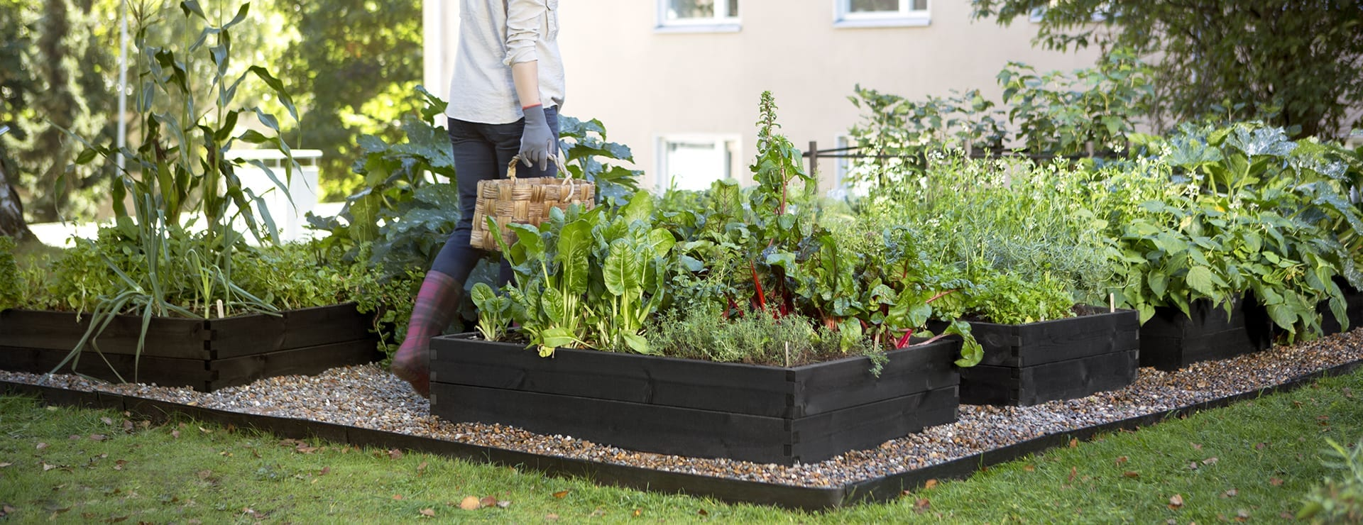 Puutarhurin vinkit: Keittiöpuutarhan perustaminen