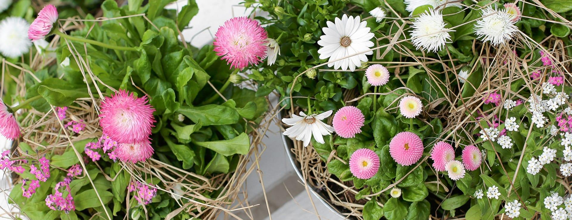 Inspiroidu! Kevät kukkii vaaleanpunaisena ja valkoisena