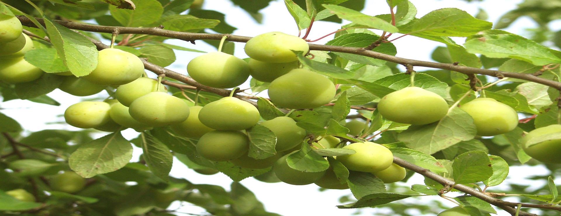 Hedelmäpuut, marjapensaat ja viiniköynnökset -30%