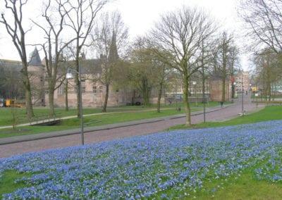 Helmond 2013 scilla chionodoxa blue (2)