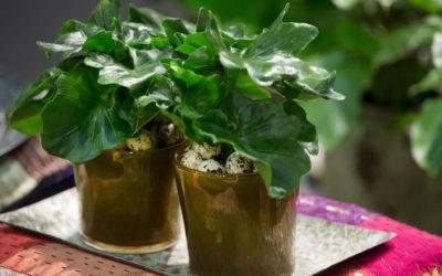 Huonekasvit tuovat luonnon sisätiloihin